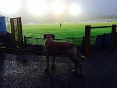 kevin cohen @inmonopinion  -  @stalbanscityfc Jasper follows 'The Saints' despite the lure of the squirrels in Clarence Park