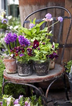 Container gardening is a fun way to add to the visual attraction of your home. You can use the terrific suggestions given here to start improving your garden or begin a new one today. Your garden is certain to bring you great satisfac Cottage Garden Plants, Garden Pots, Herb Garden, Beautiful Gardens, Beautiful Flowers, Pot Jardin, Deco Floral, Garden Chairs, Garden Furniture