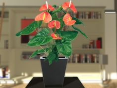 A beautifull Anthurium plant. Definately adds up to realism of your interior scene.