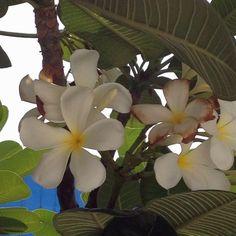 Flowers in Kolkata - India