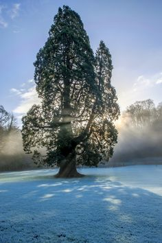 Sun behind a tree close to a steaming river in winter in Castle Combe
