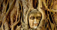 Phimai and Phanomrung sanctuaries in northeastern Thailand Khmer Sanctuaries  in Thailand      The old royal capital of Sukhothai Sukhothai Pages       Temples of Bangkok Temples of  Bangkok          YouTube  100+ Videos   on YouTube            Suggestions for hotels by Ayutthaya2020 :  Ayutthaya  Bangkok                                      Wat Mahathat in Ayutthaya