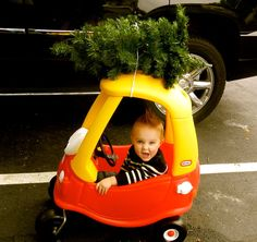 Bringing home the tree!