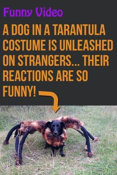Such a great prank! Makes me excited for Halloween! lol! #funny #dogs