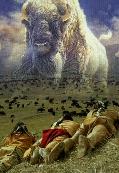White buffalo prophesy