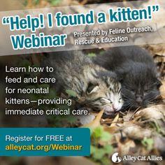 how to make a kitten an outdoor cat