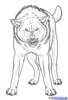 Drawing Wolf Sketches Art 17 Ideas For 2019 Animal Sketches, Animal Drawings, Art Sketches, Wolf Drawings, Pencil Drawings, Drawing Animals, Anime Wolf Zeichnung, Anime Wolf Drawing, Fox Drawing