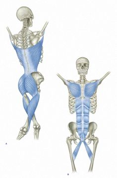 Myofascial Chain: Functional Lines