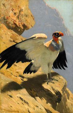 Wilhelm Kuhnert (1865-1928) - King vulture