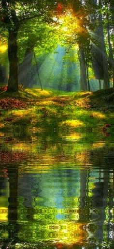 Autumn Sunrise in the forest, just beautiful. Thank you Lord, for creating such a breath-takingly beautiful world. Pretty Pictures, Amazing Pictures, Pictures Images, Amazing Nature, Beautiful Images Of Nature, Beautiful Scenery, Belle Photo, Nature Photos, Beautiful World