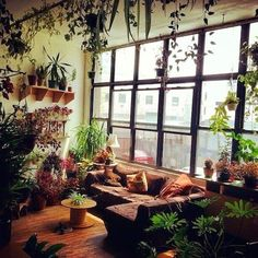 Hanging garden, and probably what my sunroom will end up like thanks to my plant hoarding problem.