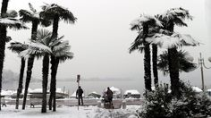Snow covered palm trees in Switzerland ....yes, palm trees!