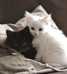 Together in purr-fect harmony…