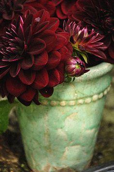 burgundy dahlias in a mint green pot