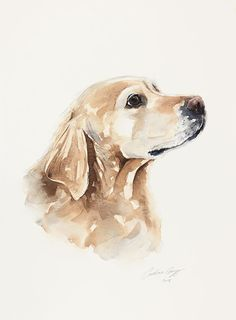 Golden Retriever original dog painting in watercolour - by Wetnose Watercolour. Custom pet portraits and prints Animal Paintings, Animal Drawings, Art Drawings, Watercolor Animals, Watercolor Paintings, Golden Retriever Art, Dog Portraits, Dog Art, Lab Puppies