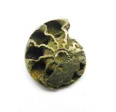 RARE UNIQUE FOSSIL AMMONITE,Golden stunning russian pyrite for silver pendant #magicalcollection #Russianpyrite #Ammonitefossil #gemstone #jewelry