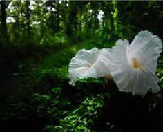 #forest #green #white #pink #flower