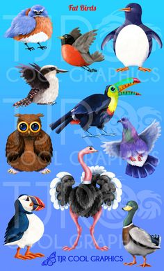 Fat Birds Clip Art by CleverVectors on Etsy