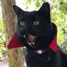 čierna mačička squirtin