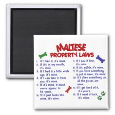 >>>Order          	MALTESE Property Laws 2 Fridge Magnet           	MALTESE Property Laws 2 Fridge Magnet In our offer link above you will seeHow to          	MALTESE Property Laws 2 Fridge Magnet Here a great deal...Cleck Hot Deals >>> http://www.zazzle.com/maltese_property_laws_2_fridge_magnet-147447200276970792?rf=238627982471231924&zbar=1&tc=terrest