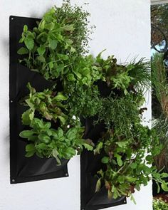 The Premium Pocket Vertical Garden Planter is perfect for creating your Dream Garden - Guaranteed to make your plants thrive and your urban garden a Show-Stoppe