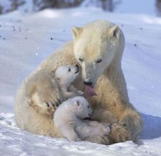 SubhanAllah..the motherlu love do not distinguish human from animal. .its all the same. May Allah grant us this unconditional long lasting love <3