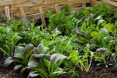 Advice on starting a kitchen garden Sarah Raven's Kitchen Garden_Photo by Jonathan Buckley. Gardenista