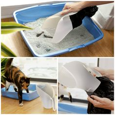 Cat Care Keeping Your Cat Healthy - Cat's Nine Lives I Love Cats, Crazy Cats, Cool Cats, Chien Jack Russel, Cat Room, Animal Projects, Pet Life, Cat Furniture, Litter Box
