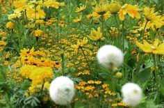 Sommerblumen im Garten richtig pflegen #News #Wohnen