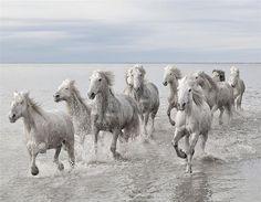 Camargue paarden (© Rex Features/Marco Carmossi)