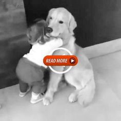 Hi give me a huge please Hi give me a huge please Hi give me a huge please Hi gi. Hi give me a hug Funny Baby Memes, Funny Babies, Funny Dogs, Cute Babies, Funny Quotes, Funny Animal Videos, Cute Funny Animals, Cute Baby Animals, Animals And Pets