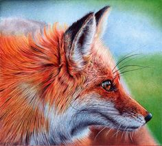 "Samuel Silva is a artist and lawyer from Portugal. He became famous for his ballpoint pen drawings which are hyper realistic and these days his realistic drawings can be seen all over social media sites. For drawings he use 8 different colored Bic ballpoint pens. You might be wondering how he is creating those colors only with pens, he says, ""I just cross hatch the different colors in layers to create the illusion of blending and the illusion of colors"". He need average 5 to 50 hours to…"