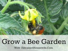 Grow a Bee Garden::The Bees need all the help they can get. Save the Bees - Save our Plant Food Source!