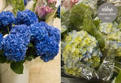 blue gerbera daisies and hydrangeas - Google Search on the left this is the blue
