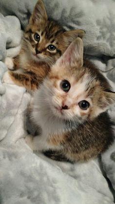 Cutie Kittens, those sweet little faces!❤️