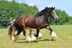 Related Pictures videos de horses mating youtube pony ...