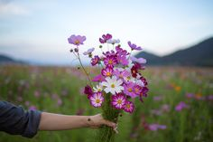 by minato Untitled Giving Flowers, Holding Flowers, Cosmos Flowers, Wild Flowers, Bloom Where Youre Planted, British Flowers, Hand Photography, Summer Aesthetic, Blossom Flower