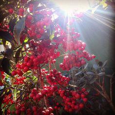 Jardim da Dona Silvia Takahama