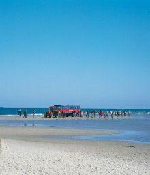 Skal du se Grene i toppen af Jylland så bo på Danhostel Skagen Skagen, Memories, Beach, Water, Outdoor, Memoirs, Gripe Water, Outdoors, Seaside