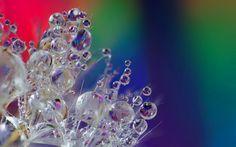 digitális művészet, virág, víz