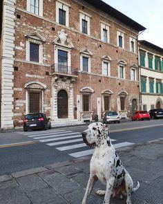 Merilo turista a casa sua Palazzo Lanfranchi Il palazzo prende nome dalla famiglia dei Lanfranchi casata dellaristo... Great Dane Dogs, I Love Dogs, Luxury, Case, Animals, London, Rook, Animales, Animaux