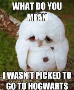 Funny pictures about Sad Baby Owl. Oh, and cool pics about Sad Baby Owl. Also, Sad Baby Owl. Baby Owls, Baby Animals, Cute Animals, Penguin Baby, Funny Animal Quotes, Funny Animal Pictures, Baby Pictures, Funny Photos, Meme Pics