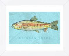 Rainbow Trout (Framed)