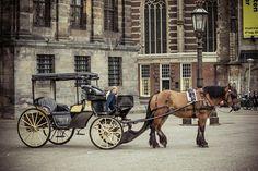 Paard en koets Amsterdam. jhh fotography