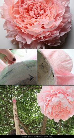 Giant Crepe Paper Peony---Part 10 of 10---written directions on post---http://bloggingcornerblog.blogspot.com/2013/07/giant-paper-peony-pinatas.html