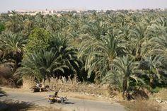 El oasis de Bahariya en Egipto - http://vivirenelmundo.com/el-oasis-de-bahariya-en-egipto/3954