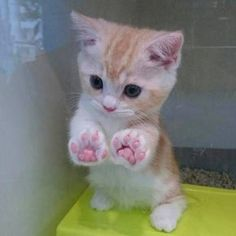 And this tiny kitten with perfect paws.   27 Cat Pictures Because Life Is Literally Just Terrible