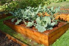 Es inherente a la naturaleza de un huerto o un jardín que su cuidado requiere un esfuerzo. No podemos tener un bello jardín o una huerta productiva estando tumbados en el sofá, eso lo tenemos todo …