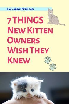 Understanding The Needs Of Baby Animals Takes Time And Careful Research Kittens Can Be Rambunctious They Have Lots Of En Pet Quotes Cat Animal Quotes Kittens