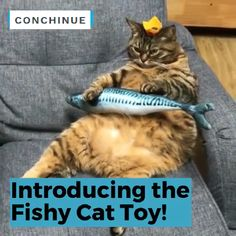 Plush Creative Fish Shape Cat Toy Pet Gifts Catnip Stuffed Pillow Made of cotton and short plush, it's soft and will not do harm to cats' paws. The simulation fish toy looks like real fish, it will make a lot of fun between you and your cat. Animal Jokes, Funny Animal Memes, Funny Animal Videos, Cute Funny Animals, Funny Animal Pictures, Cute Baby Animals, Cat Memes, Cute Cats, Funny Cats